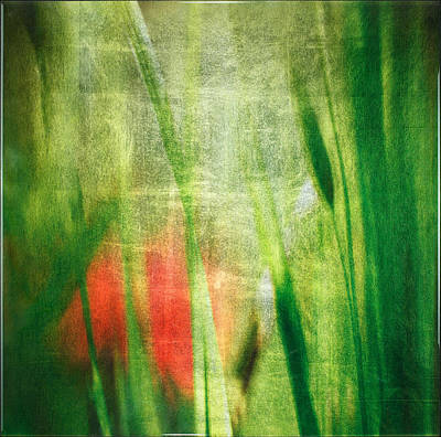 Silver Grass Mixed Media Posters