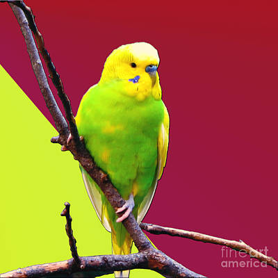 Parakeet Mixed Media Posters