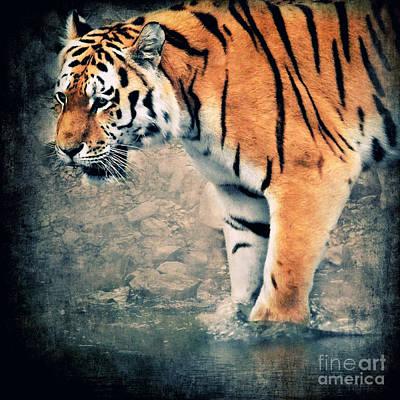 Tiger Mixed Media Posters