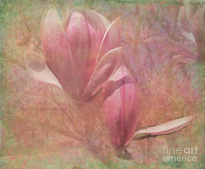 A Peek Of Spring Poster by Arlene Carmel