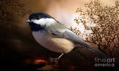 Black Capped Chickadee Poster by Elaine Manley