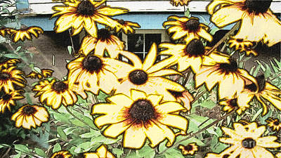 Black-eyed Susan Sketch Poster by Beverly Guilliams