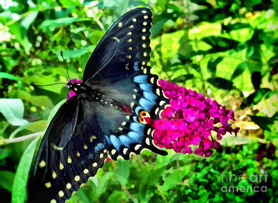 Butterfly Beauty Poster by SiriSat