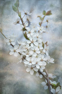 Flowering Tree Poster by Gynt Art