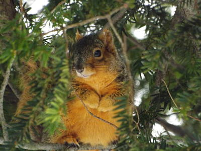 Fox Squirrel Poster