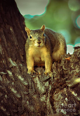 Fox Squirrel Poster by Robert Bales