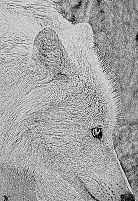 Poster featuring the drawing  Gentle Arctic Wolf  by Debra     Vatalaro