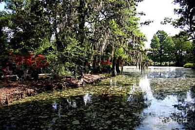 Magnolia Plantation Gardens Poster