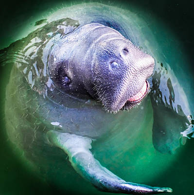 Manatee World Poster