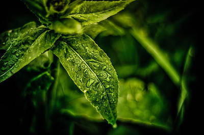 Poster featuring the photograph  Morning Dew by Jason Naudi Photography