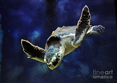 Poster featuring the photograph  Sea Turtle by Savannah Gibbs