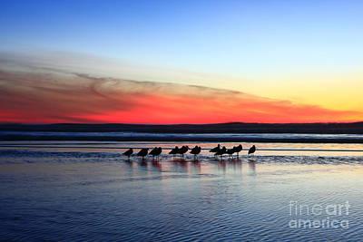 Shorebird Sunset Poster
