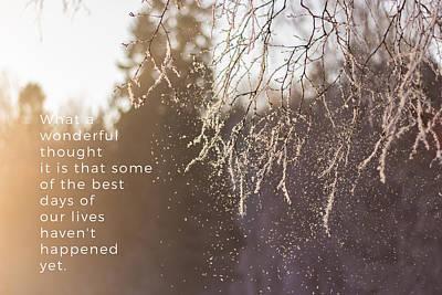 Snow Falling From A Tree Branch Poster by Aldona Pivoriene