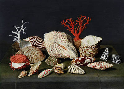 Still Life With Shells And Coral Poster by Jacques Linard