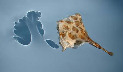 The Shadow Of Life   Poster by Viggo Mortensen