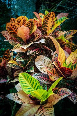 Variegated Plants Poster