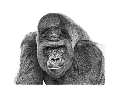 Poster featuring the drawing 042 - Gomer The Silverback Gorilla by Abbey Noelle