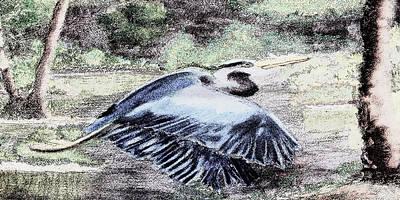 091714 Graphic Pen Blue Heron Poster