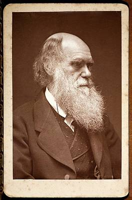 1874 Charles Darwin Photograph Portrait Poster