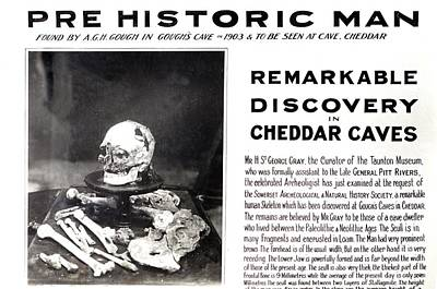 1903 Skeleton Cheddar Man Gough's Cave Poster by Paul D Stewart