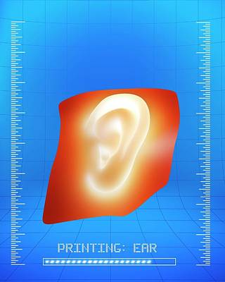 3d Printing Of A Human Ear Poster by Alfred Pasieka