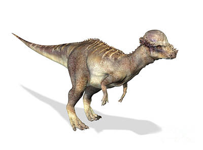 3d Rendering Of A Pachycephalosaurus Poster by Leonello Calvetti