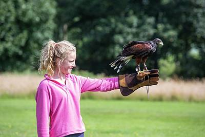A Falconry Display Poster by Ashley Cooper