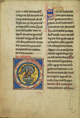 A Pelican Feeding Her Young Unknown Thérouanne Poster