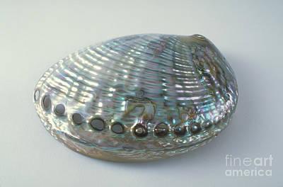 Abalone Shell Poster by Barbara Strnadova