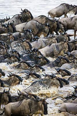 Africa Tanzania Wildebeest Herd Poster