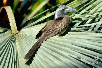 African Grey Hornbill Poster by George Atsametakis