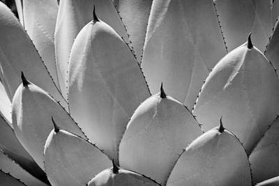 Agave Leaves Poster by Kelley King