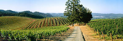 Agriculture - A Hillside Wine Grape Poster by Timothy Hearsum