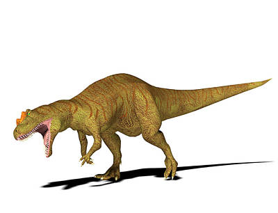 Allosaurus Dinosaur Poster by Friedrich Saurer