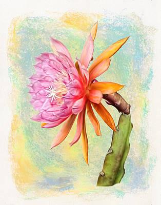 American Sweetheart Epiphyllum Bloom Poster by Robert Jensen