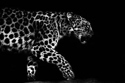 Amur Leopard Poster by Martin Newman
