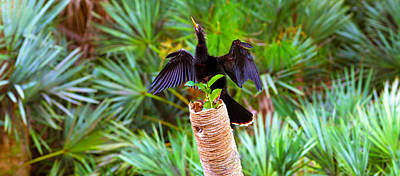 Anhinga Anhinga Anhinga On A Tree Poster by Panoramic Images
