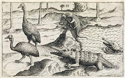 Animals Of Java, 17th Century Poster