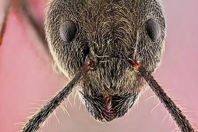 Ant Head Poster by Nicolas Reusens