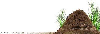 Ant Mound, Artwork Poster by Claus Lunau