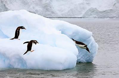 Antarctica, Neko Harbor Poster by Jaynes Gallery