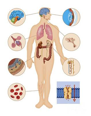 Aquaporin Roles In The Body Poster by Art for Science