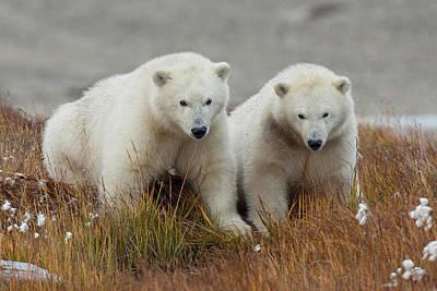 Arctic National Wildlife Refuge (anwr Poster by Hugh Rose