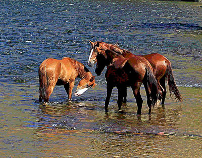 Arizona Wild Horses On The Salt River Poster
