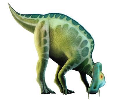 Artwork Of A Corythosaurus Dinosaur Poster by Mark Garlick