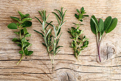 Assorted Fresh Herbs Poster