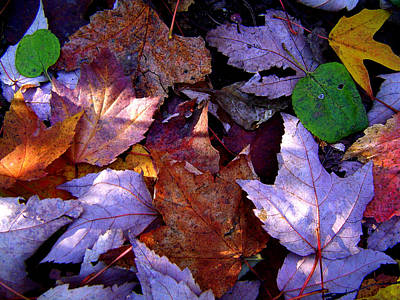 Autumn Groundcover Poster