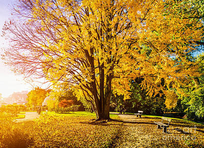 Autumn In The Park Poster by JR Photography