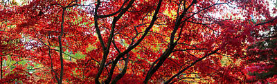 Autumn Leaves, Westonbirt Arboretum Poster