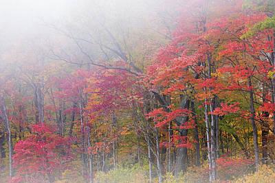 Autumn Shoreline In Fog Poster by Dean Pennala